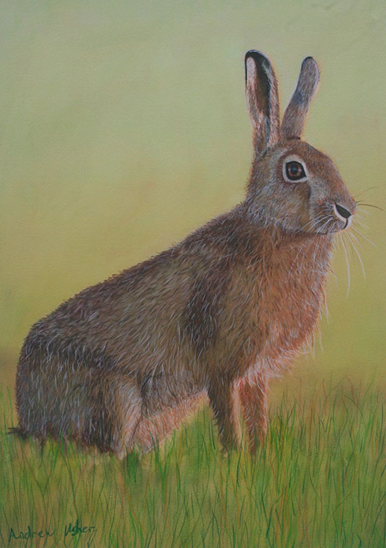 Bunny The Hare